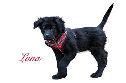 Luna FKA Skye