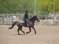 Savanah Rose reining on Elegant Chex