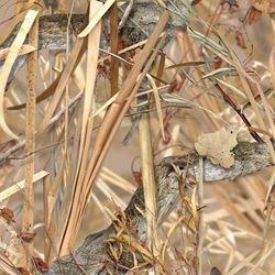 WTP 425 Kings Field Shadow