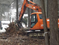 Knocking down a tree