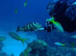 A friendly grouper with our dive leader