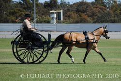 National Carriage Driving Championships 2010