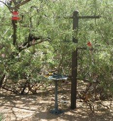 Wild Bird Habitat