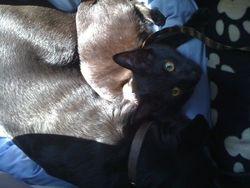 Juno is a Cuddler!