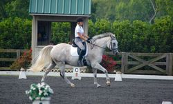 Meghan & Buster owning the dressage