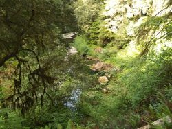 River in the Redwoods