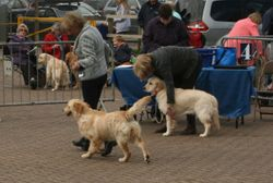 South Western Gundog Club