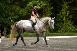 Bruno in dressage at New Event Horse
