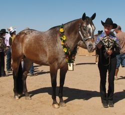 Lisa Pope showing Reserve Grand Champon Gelding Zip N Jazzy