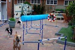 Back garden / Playground