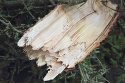 Chunk of wood ripped from tree top broken in storm 7-21-14