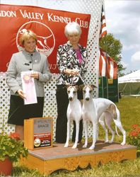 Lily & Lacey - Best Brace at Specialty Show