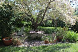 Blossom Canopt