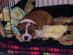 Tilly 8 weeks