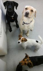 Ellie, Marley, Pancho and Jacob