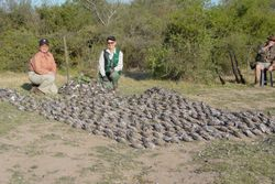 Argentina Doves