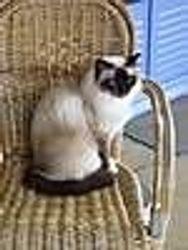 our cat Mooiman