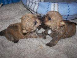 Pepper's Puppies