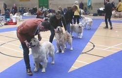 Open Dog Lineup