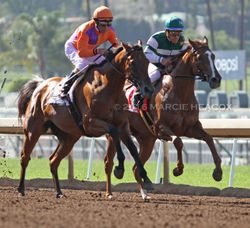Beholder and Stellar Wind