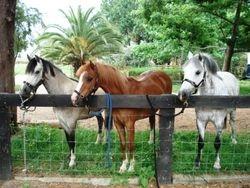 Pony Tales Parties Three Pretty Boys