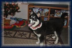 Jetta first Christmas 2009