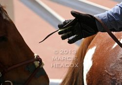 Pony Rider Reach