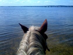 The most perfect view...Lake Whitney through Samson's Ears!