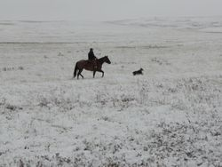 Red and Mattie working in the snow