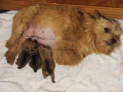 Pepper and Her Puppies