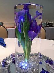 Submerged Irises