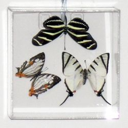 3 Black and White Butterflies in Acrylic Frame