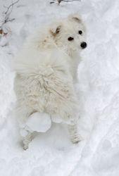 winter Honey :) Snow-Balled up