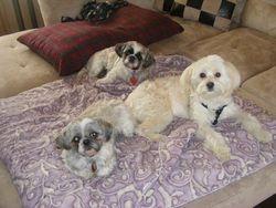 3 Absolute Sweeties!!