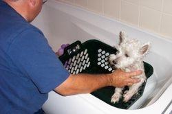 Pepsi having a bath