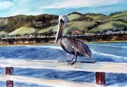 Pelican at Pismo Beach