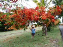 Jan under a Flamboyance tree