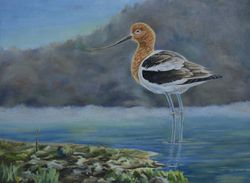 "American Avocet (9 by 12"" oil on canvas) Collection of Artist"