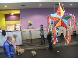 The dogs even had a pinata... they went nuts for it!