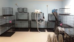 Kennel/Drying Room