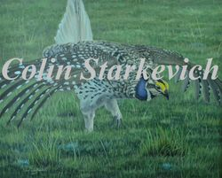 "New Season - Sharp-tailed Grouse (16 by 20"" acrylic on masonite) Collection of Wallace Stegner House, Eastend SK - donation"