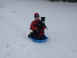 Moreau sledding dog