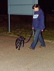 Brodie walking