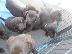 Pups outside
