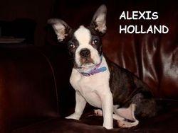 ALEXIS HOLLAND