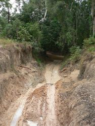 Palm Creek
