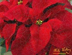 Nochebuena (Poinsettia) #9