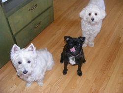 Cosmo, Zoe and Dexter
