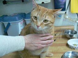 Jack the cat enjoying his kitty reiki session
