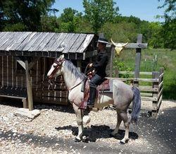 saddle set #88